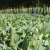 Un innovador sistema agropecuario revoluciona el campo brasileño